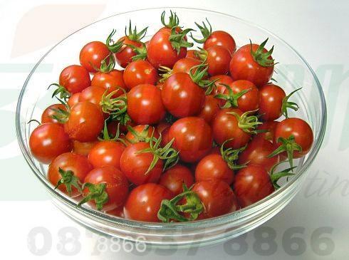 Cà chua bi phòng bệnh ung thư tuyến tiền liệt 1